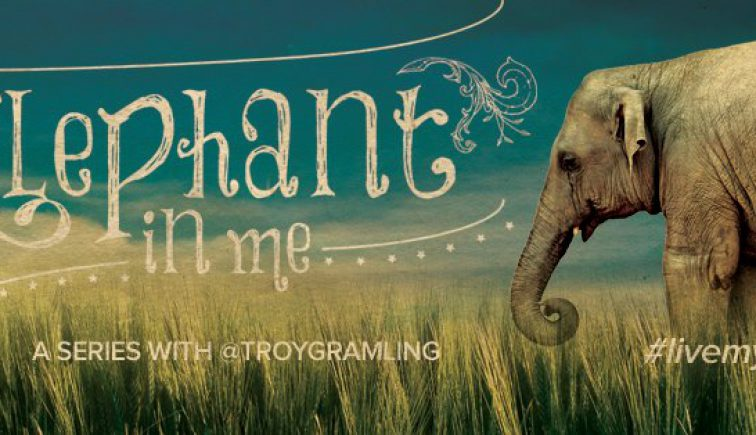 The Elephant in Me - Potential Church