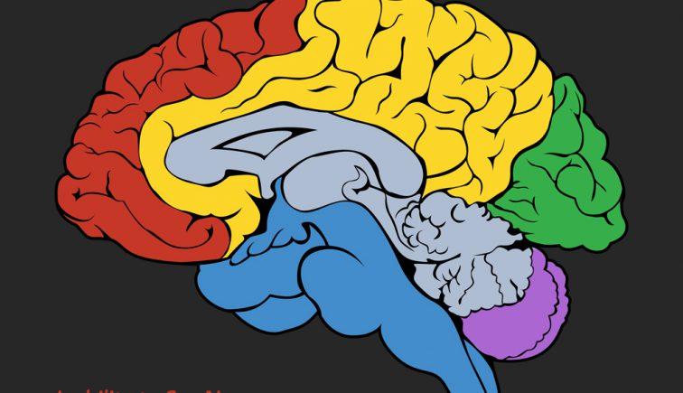 graphic-designer-brain
